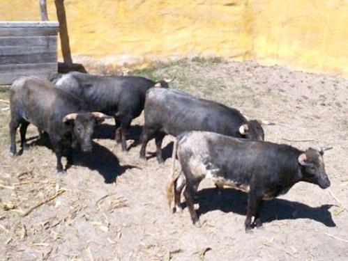 LOS DE SAN MARCOS EN CAÑADAS_JALISCO_02.02