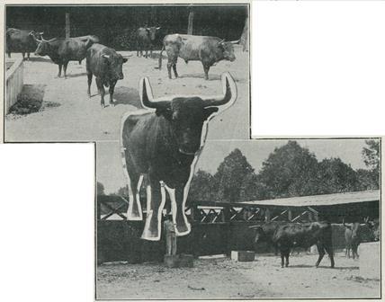004_ET_AÑO III_Nº 78_17.11.1920_p. 2a