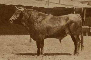 TORO DE PIEDRAS NEGRAS_EL RUEDO N° 176_06.11.1947_p. 17