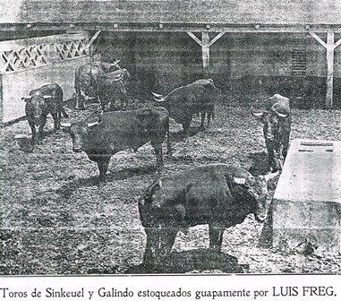 TOROS DE SINKEHUEL Y GALINDO_JUNIO 1909