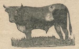 UN TORO DE ATENCO EN 1926