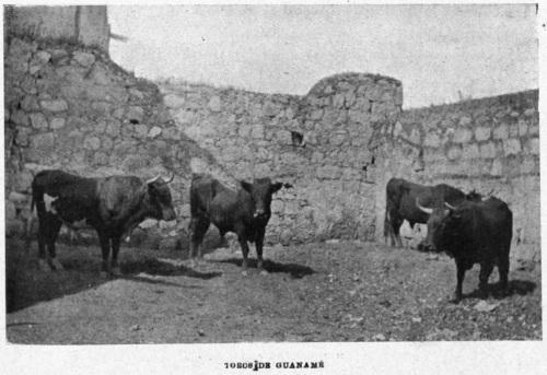 QUERÉTARO_24.12.1903_A. MONTES