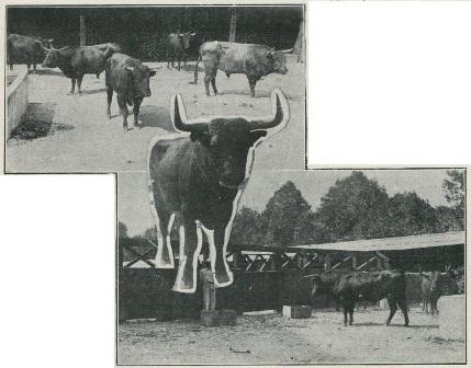 el-toreo_17-11-1920
